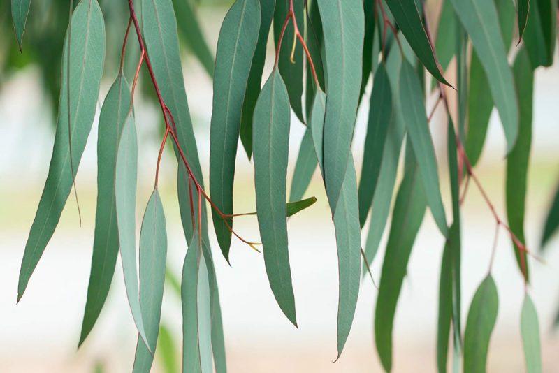 Project Eucalyptus